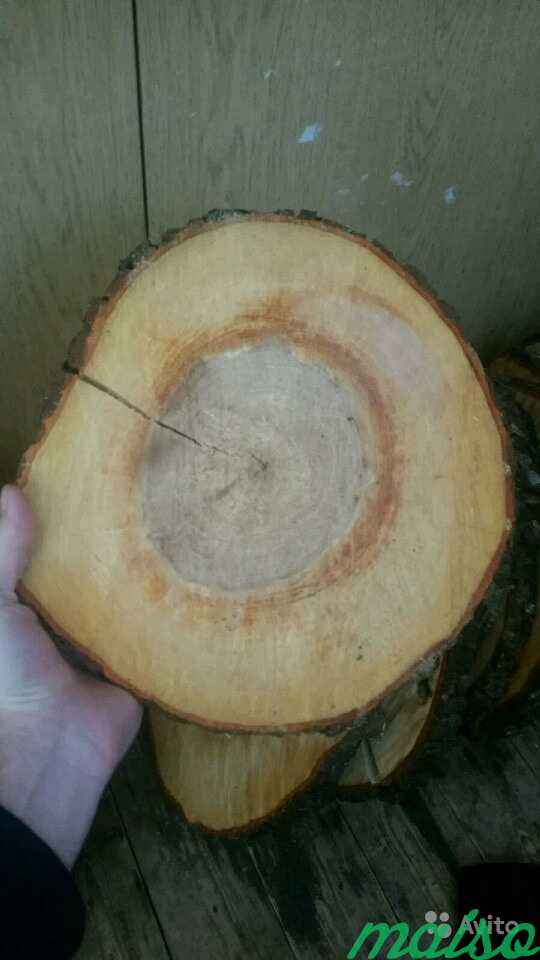 Дерево в стиле лофт в Москве. Фото 1