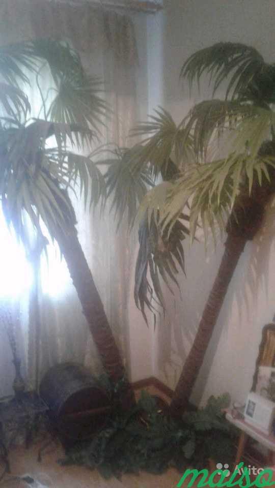 Декоративные пальмы в Москве. Фото 1
