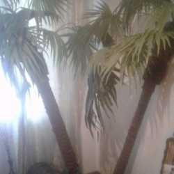 Декоративные пальмы