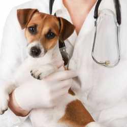 Ветеринарная помощь на дому (ветеринар на дом)