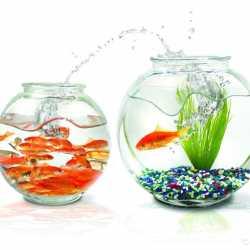 Обслуживание Аквариумов. Чистка аквариумов