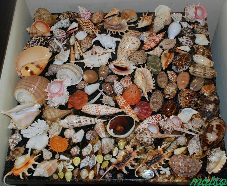 Коллекция декоративных ракушек в Москве. Фото 1