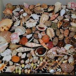 Коллекция декоративных ракушек